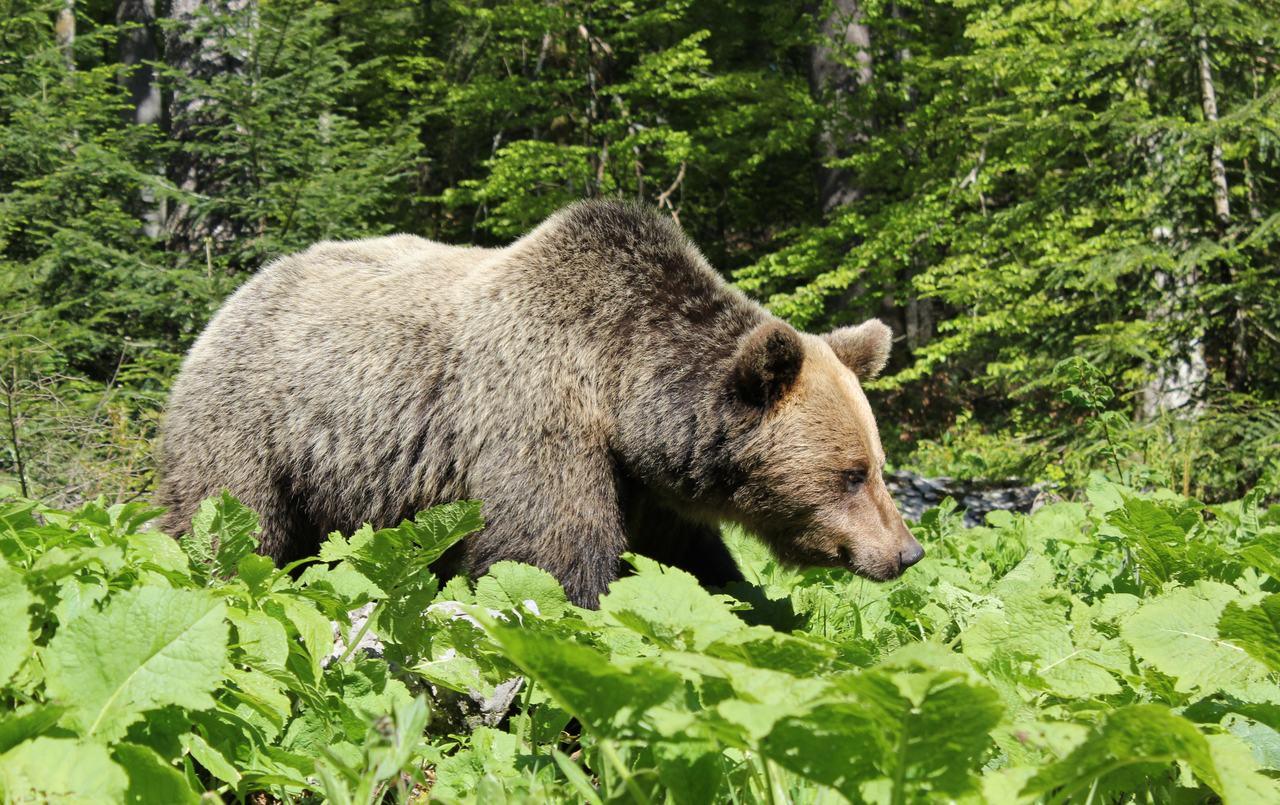 NATURE&WILDLIFE - strip natječaj o suživotu čovjeka i medvjeda